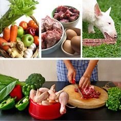Thing To Know Before Buying Raw Food for Dogs?