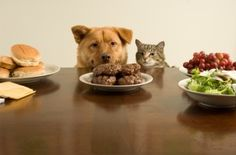 What is The Nutritional Value of a Raw Dog Food Diet for dogs?