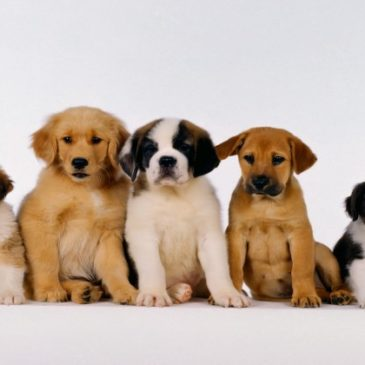 What Types Of Dogs is the Raw Food Diet Recommended For?