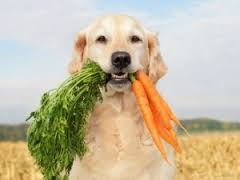 7 Reasons a Raw Food Diet is Better For Your Dog