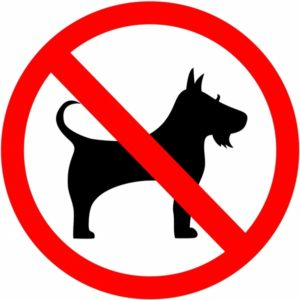 7 Reasons Why Your Pet Eats Their Poop and How To Stop It?