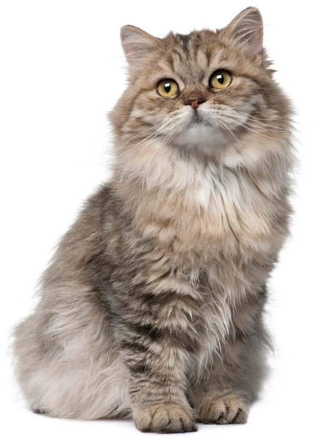 Homemade Cat Food Recipes For Urinary Problems