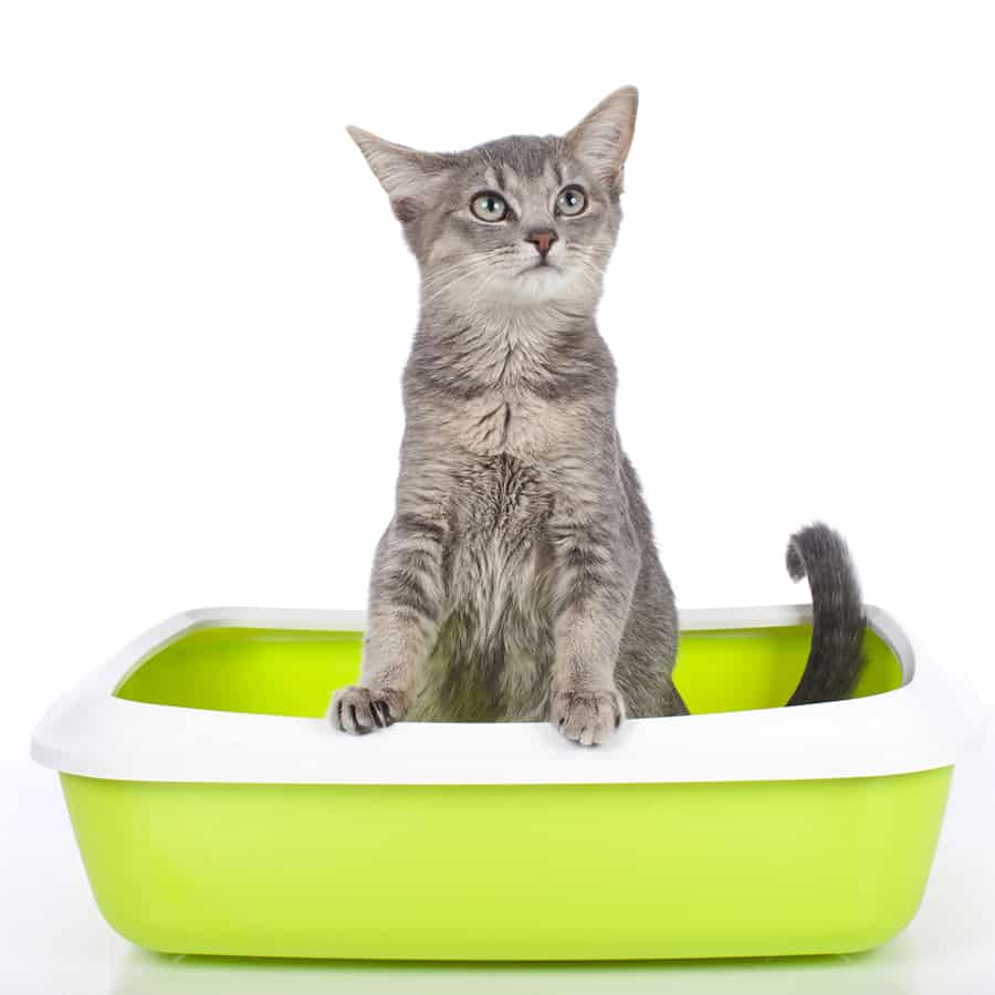 homemade cat food recipes for sensitive stomach