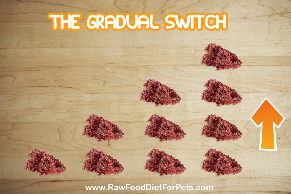 raw food diet for dogs gradual switch