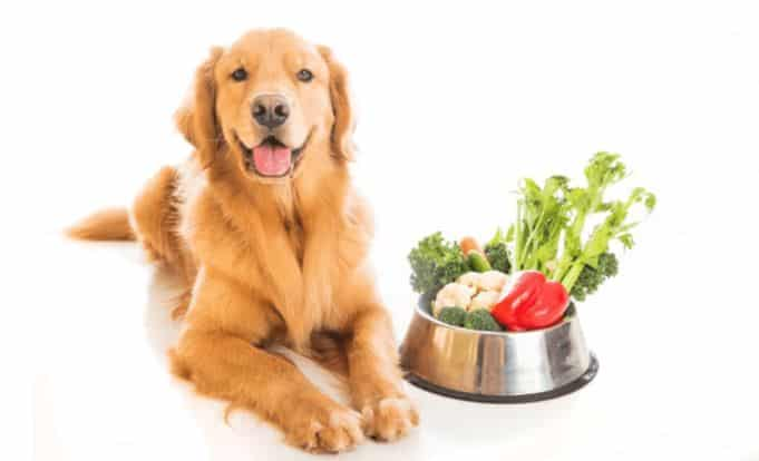 dog raw fruits and vegetables