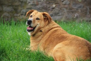 Unhealthy Eating Habits For Dogs